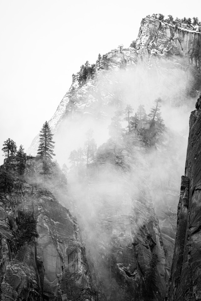 Pine trees in the fog, growing on rocky cliffs in the canyon wall of Zion.