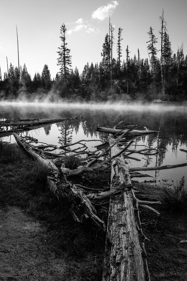 """Two fallen trees in the shape of a """"V"""", framing the mist-covered surface of String Lake."""