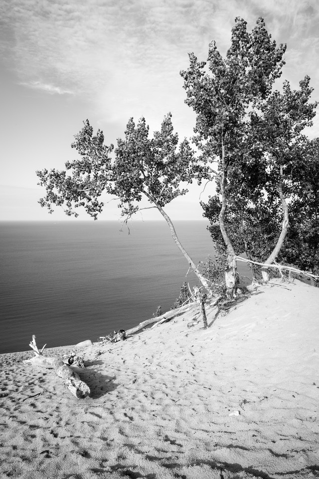 A tree in the sand at the Lake Michigan Overlook at Sleeping Bear Dunes National Lakeshore, with Lake Michigan in the background.