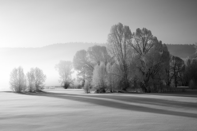A group of trees covered in hoar frost in the morning fog at Willow Flats, Grand Teton National Park.