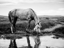A horse drinking water in El Calafate, Argentina.