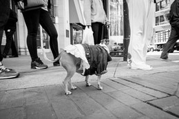 A dog wearing a skirt and a denim jacket on Market Street, San Francisco.