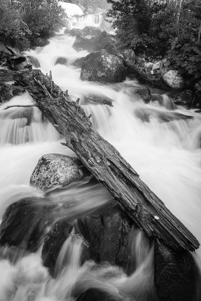 The waters of Taggart Creek rushing through rocks and a fallen log.