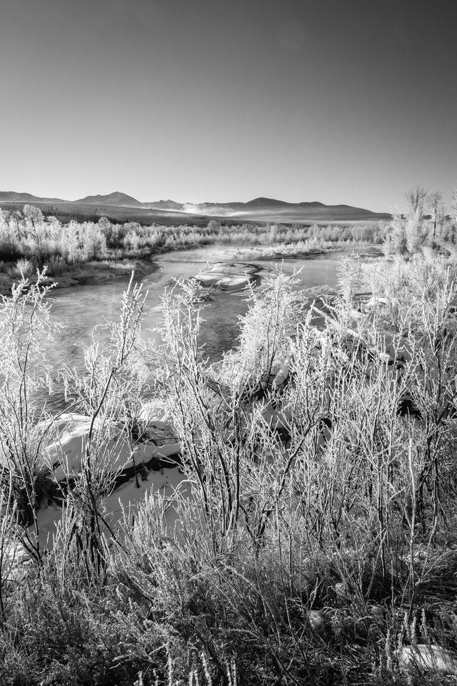 The Gros Ventre river during a winter sunrise. In the foreground, hoarfrost-covered branches.