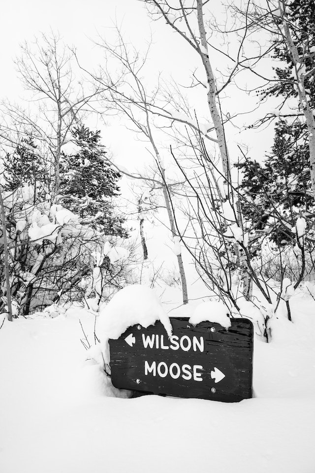 A road sign on the Moose-Wilson Road, partially covered in snow.