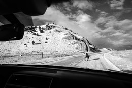 The view from the passenger seat of our car while a bighorn sheep ram blocks the road, at the National Elk Refuge, Wyoming.