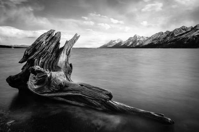A long exposure photograph of a large, curved piece of driftwood on the shore of Jackson Lake, framing the Tetons.