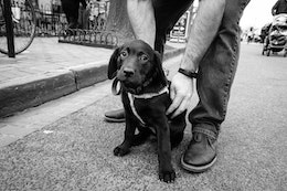 Lily, a sweet puppy posing in Eastern Market.